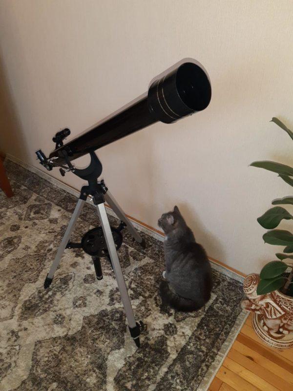 гаранд х и наш кот